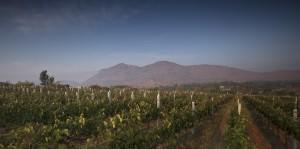 SDU Winery in Nandi Valley, Karnataka