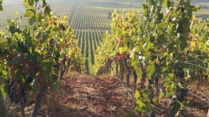The Montes vineyards in Colchagua Valley