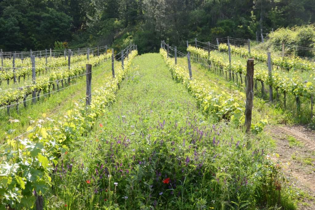 The natural wild beauty of the vineyards